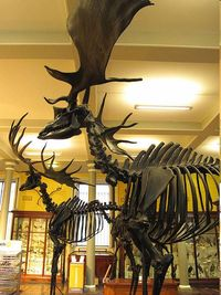 Picture3 Deer