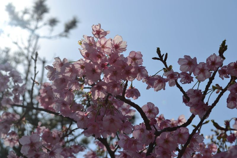 Kamakura-15
