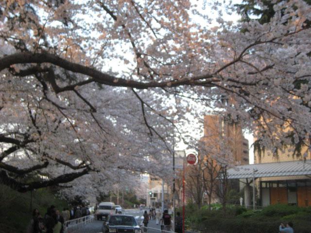Campus sakura
