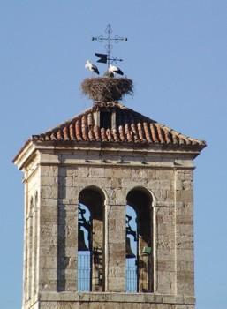 Cigueña y nido
