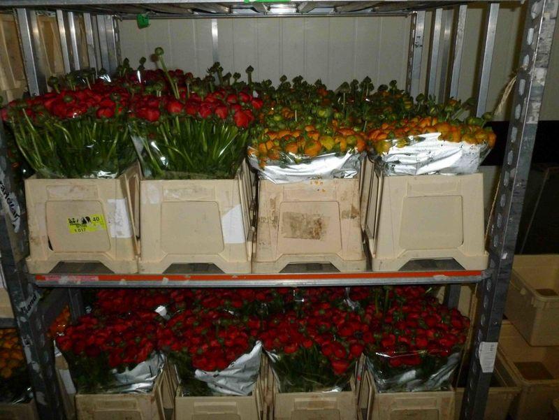 Ranunculus market_1022x768