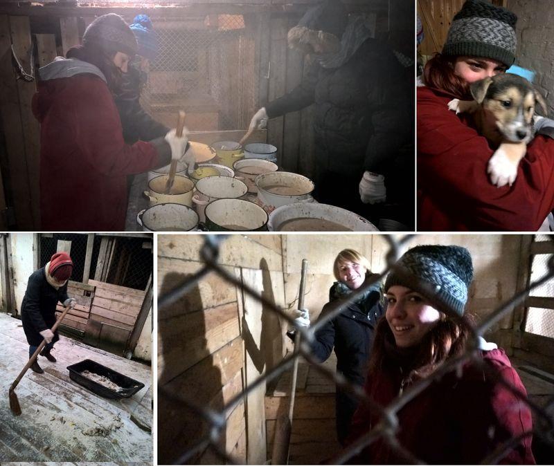 18. AB, Arkhangelsk animal shelter