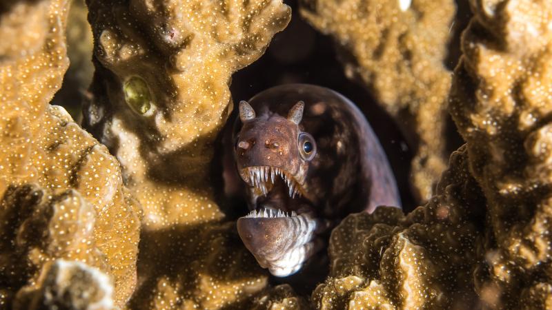 Bilikiki Bay shadowy eel
