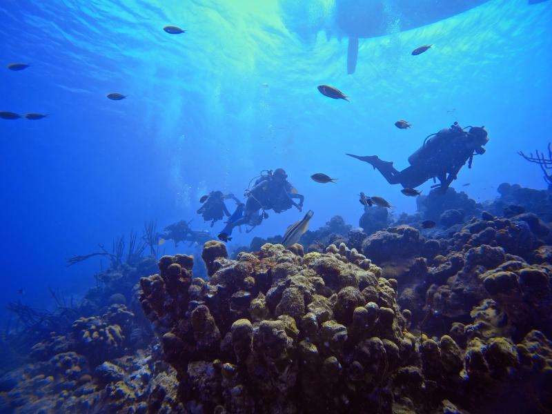Sara dive group reef crest