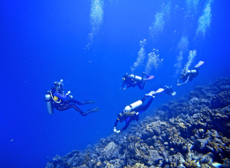 Sara dive group reef crest
