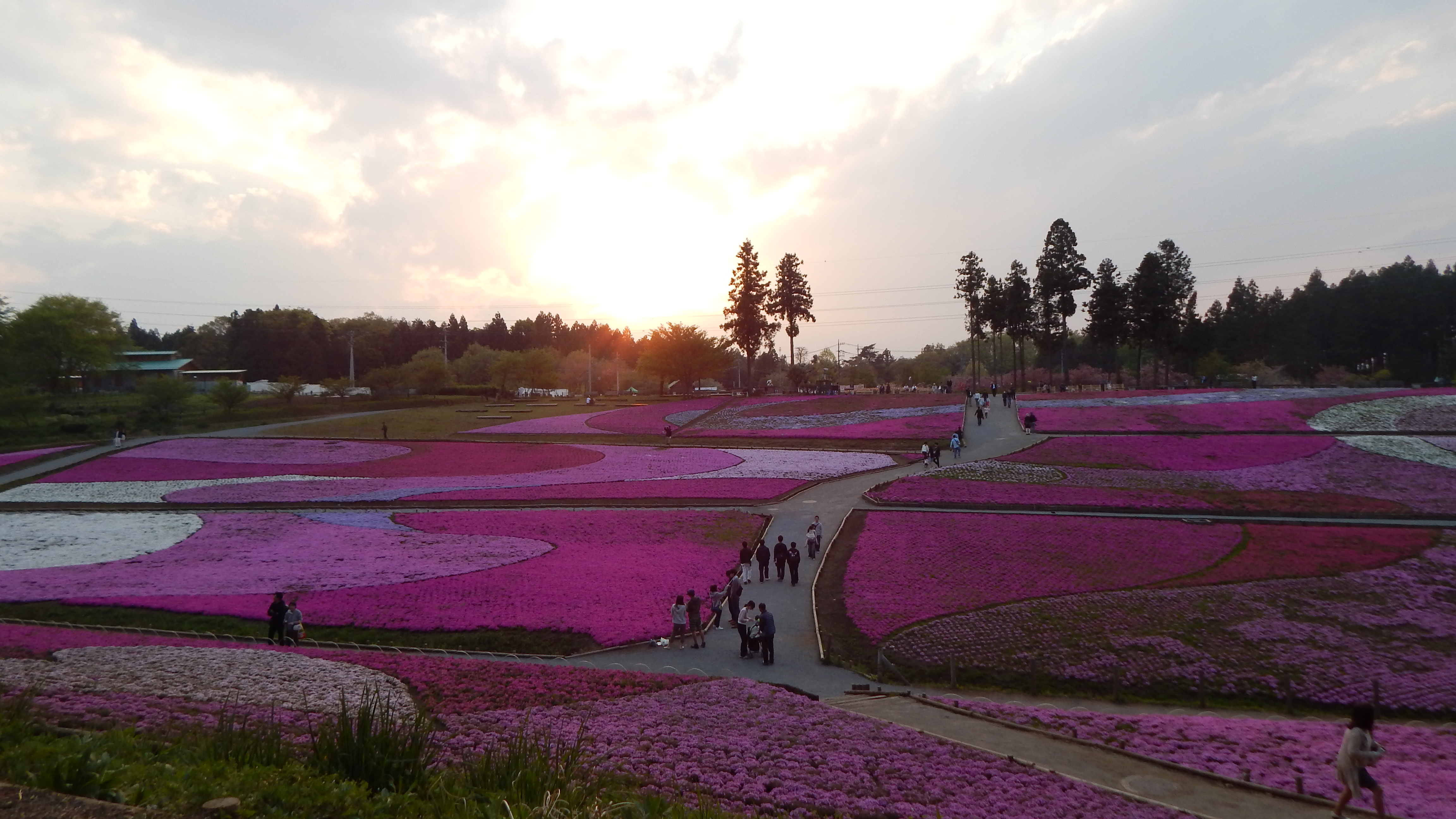 Study Abroad In Japan Blog Tokyo Arts Sciences Ciee The