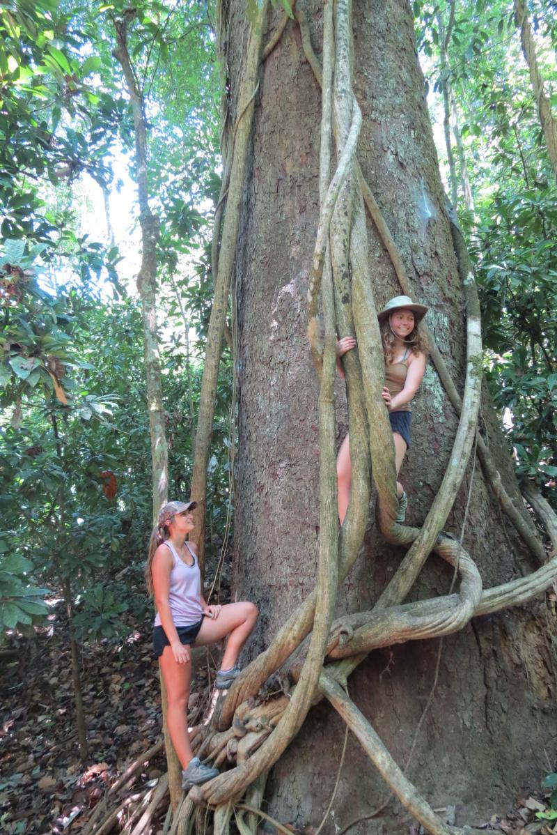 Janie&KayleCashewtree(Carara)*