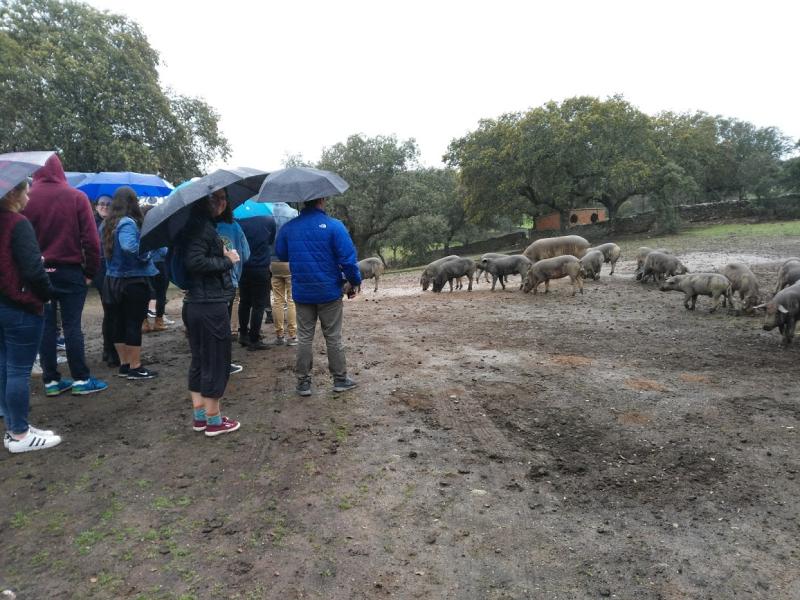 Pig farm 2